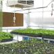 Merit Medical - Plant Sales - Christmas Poinsettias