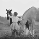 Girl and Pet Horses - Merit Medical - Veterinary Products