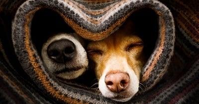 Merit Veterinary -