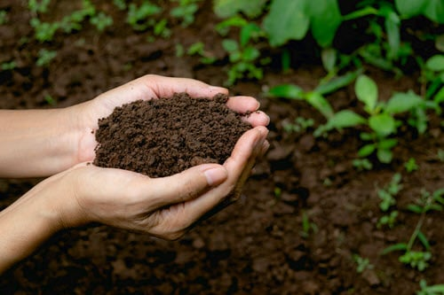 Feeding the Soil with Green Waste