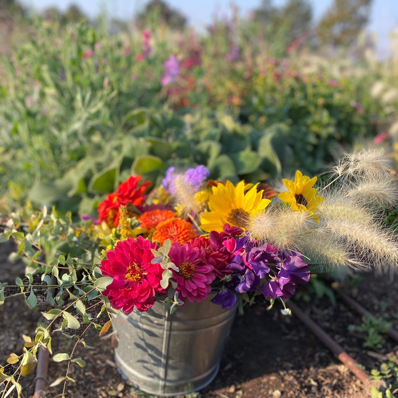 Cut Flowers and Flower Arrangements for Sale
