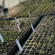 Merit Garden - 2020 Accomplishments