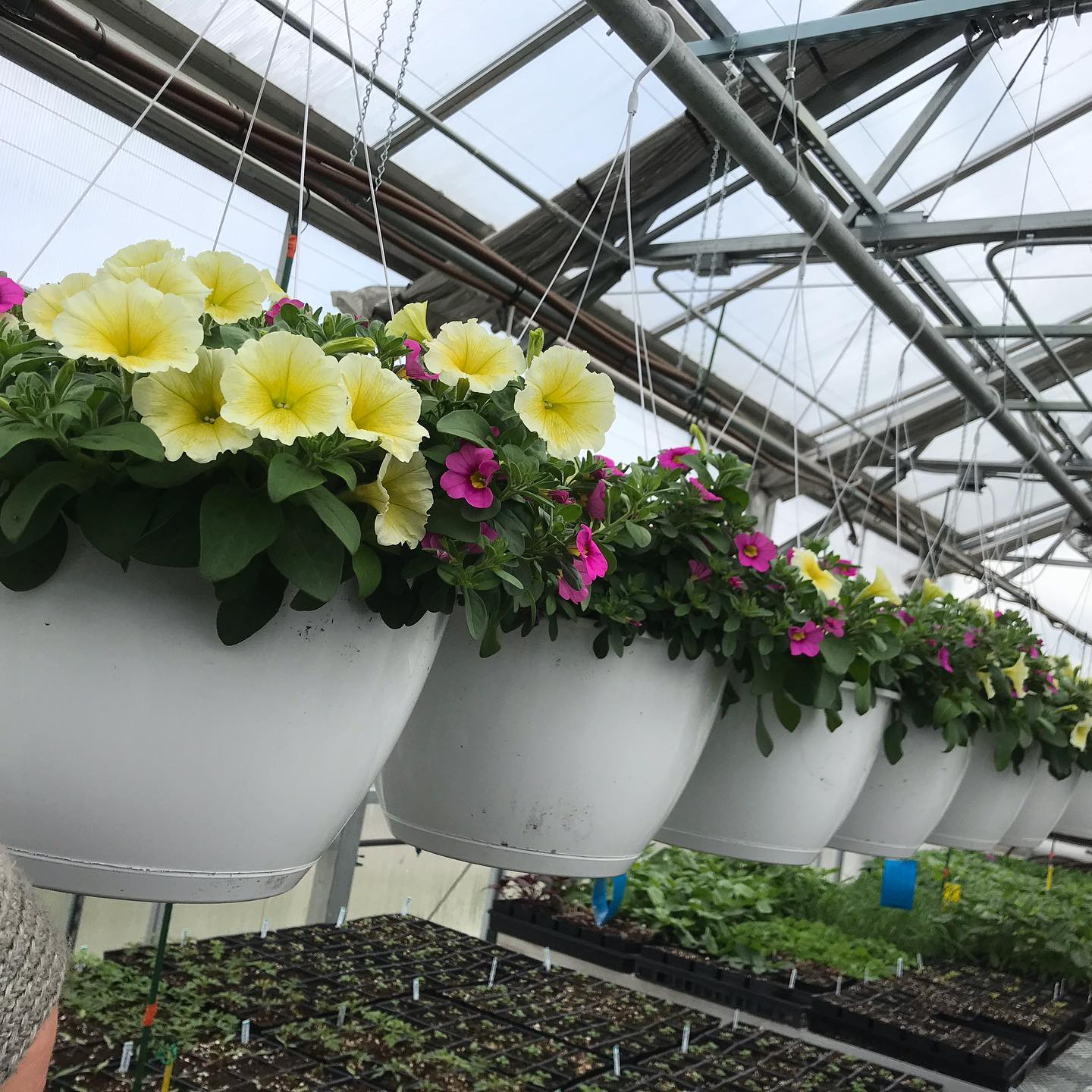 Hanging Baskets and Plants Raise Money