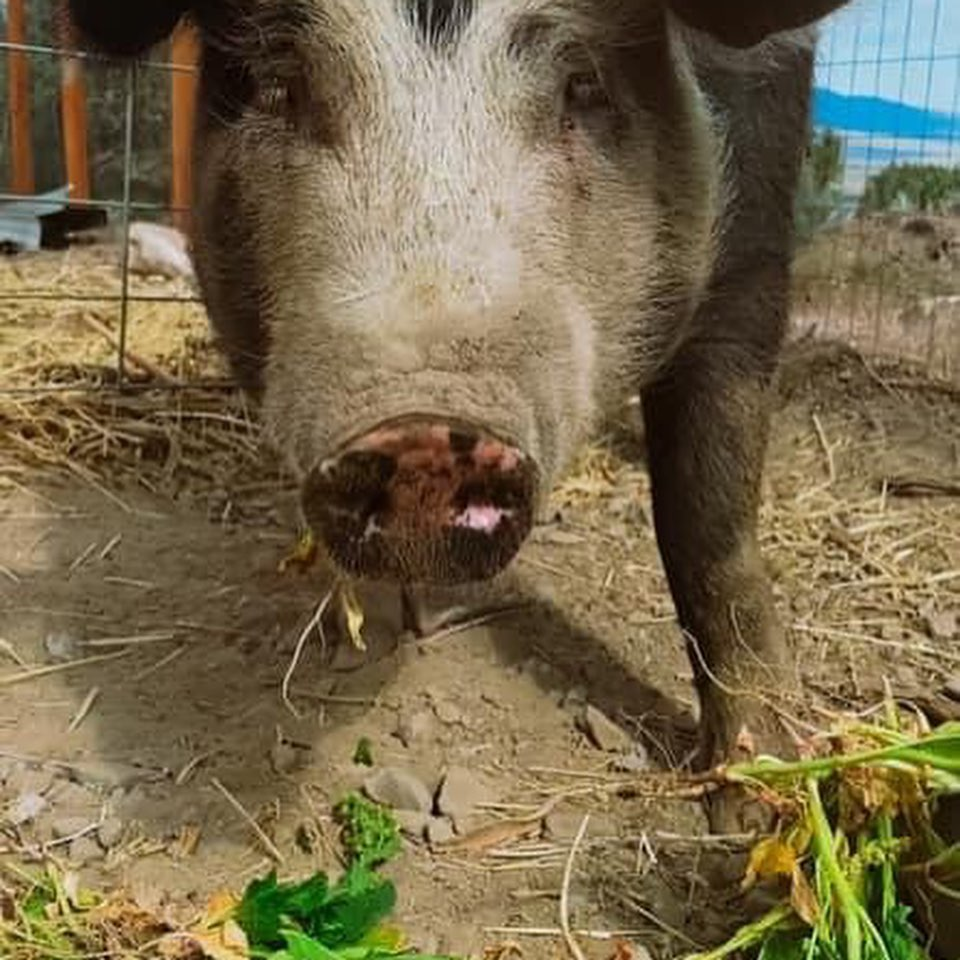 Donating Inedible Produce to Farm Animals